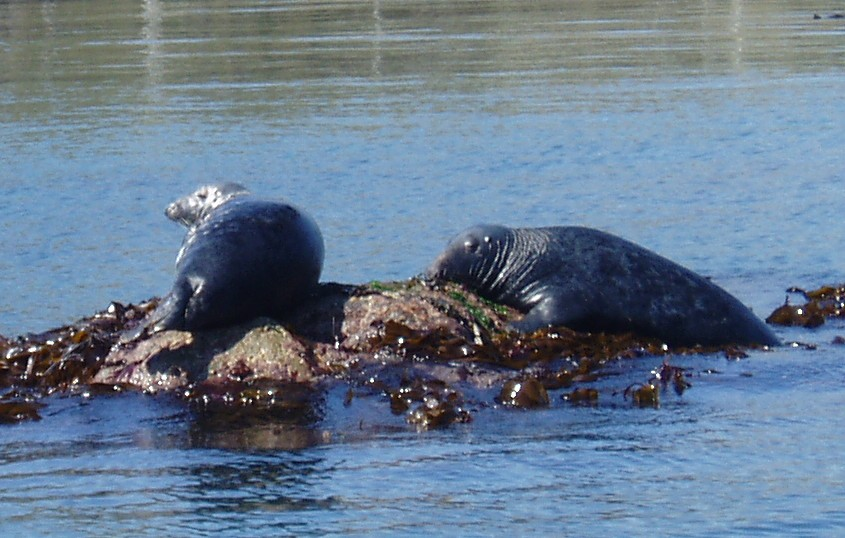 Seals .JPG