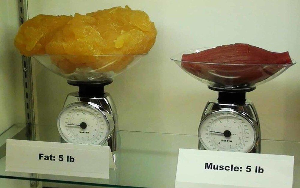 lean-muscle-mass-wakefield