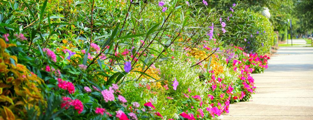 rotator-flowers.jpg
