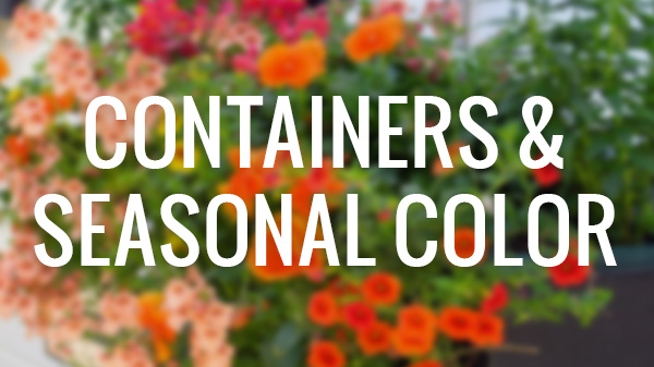 Containers & Seasonal Color