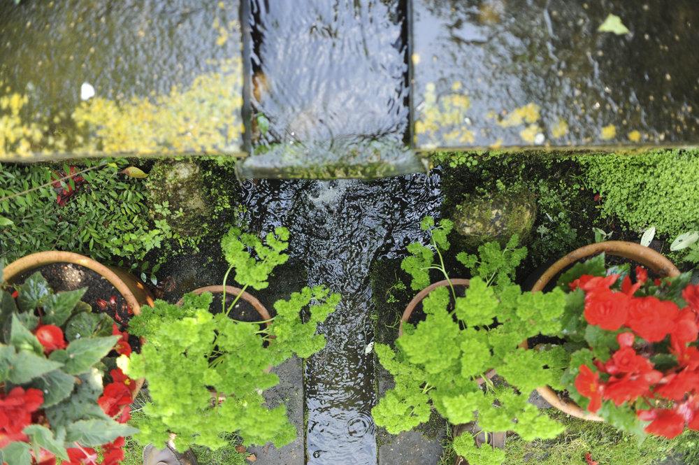 Shepherd House garden1717.jpg