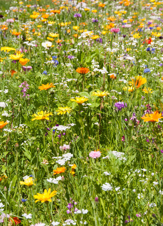 Picturesque flower meadow beautiful field various flowers Stock