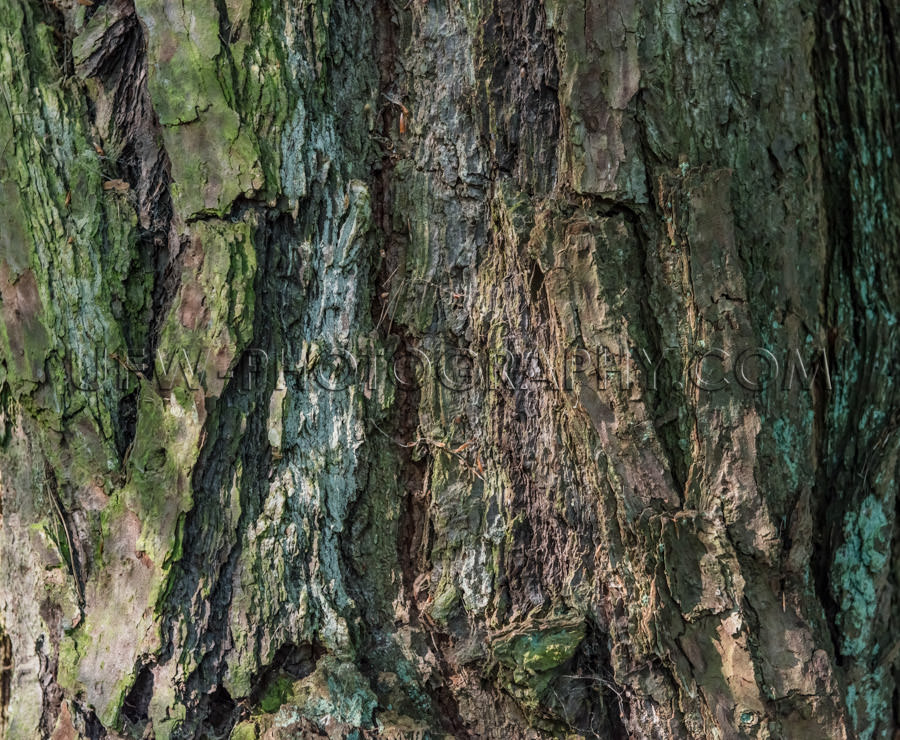 Rough bark pattern pine tree close up full frame background Stoc