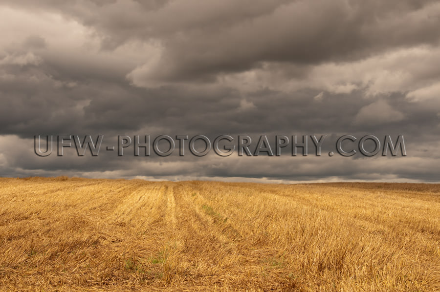 Autumn golden stubble field dark cloudy stormy sky Stock Image