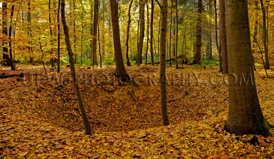 Crater peaceful autumn forest colorful foliage leaves tree Stock