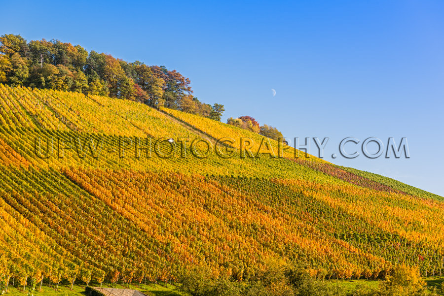 Grapevines in a hilly landscape, clear sky and half moon - Stock