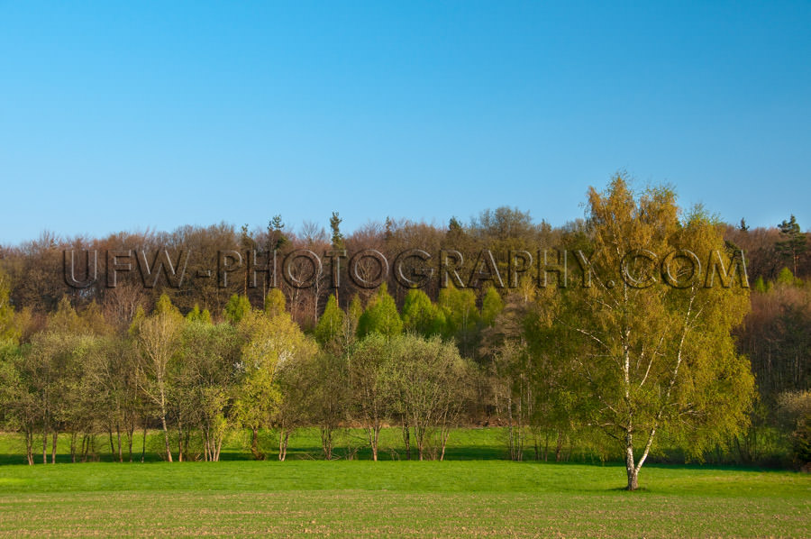 Idyllic landscape meadow row trees spring leaves blue sky Stock