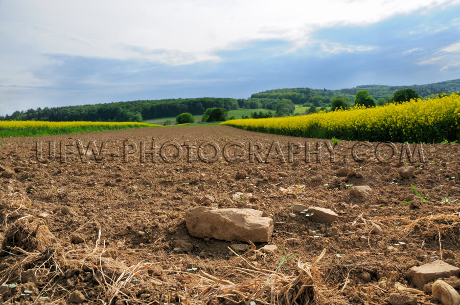 Plowed rocky farmland stony soil between canola fields Stock Ima