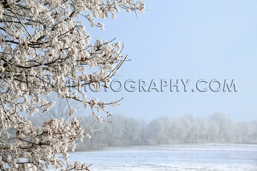 Winter scene, ice covered tree, snowy field and blue sky - Stock