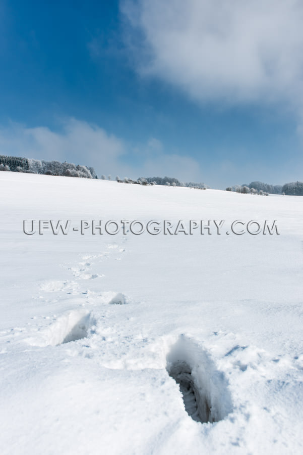 Winter snow landscape sunny footsteps trees blue cloudy sky Stoc