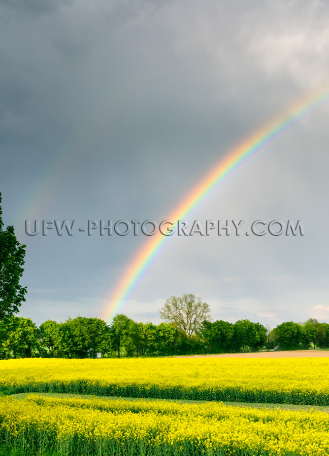 Beautiful rainbow bright yellow rapeseed landscape rainy sky Sto
