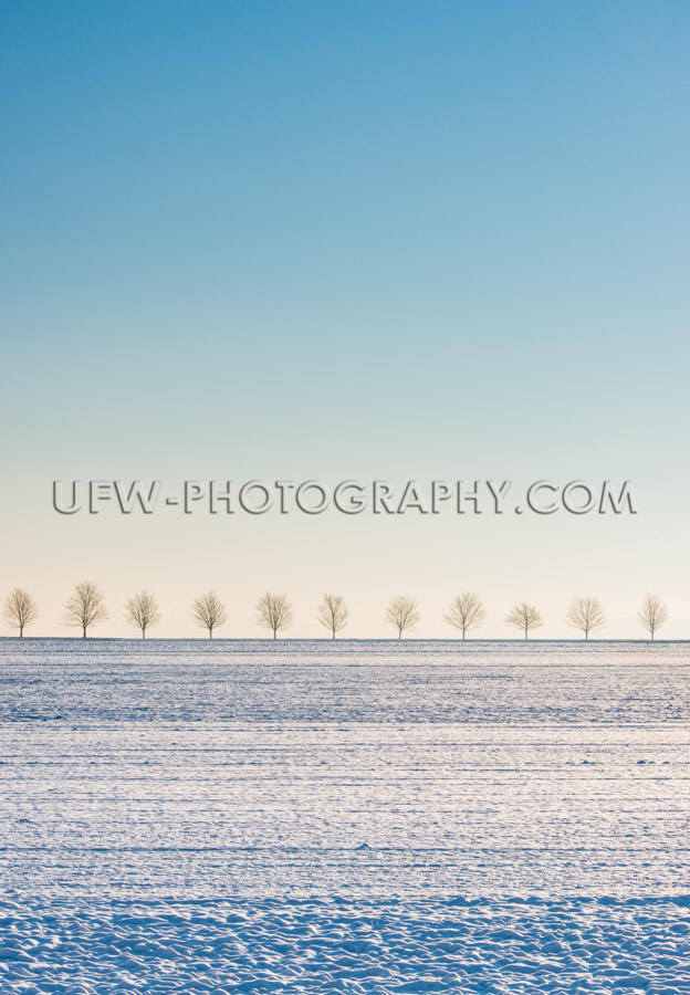 Winter scene snow covered field, row of trees, blue sky - Stock