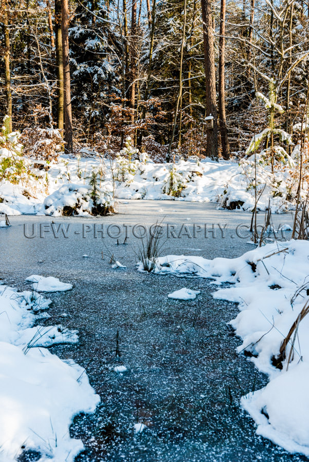 Winter wilderness habitat ice frozen pond snow plant forest Stoc