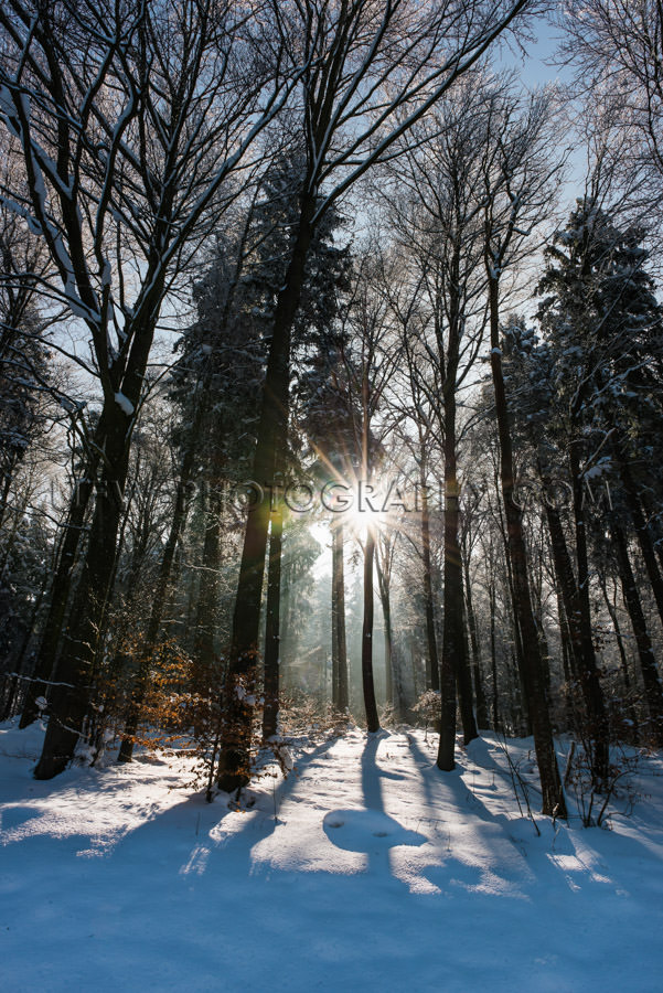 Winter snow forest sun star shines trees sunset backlight Stock