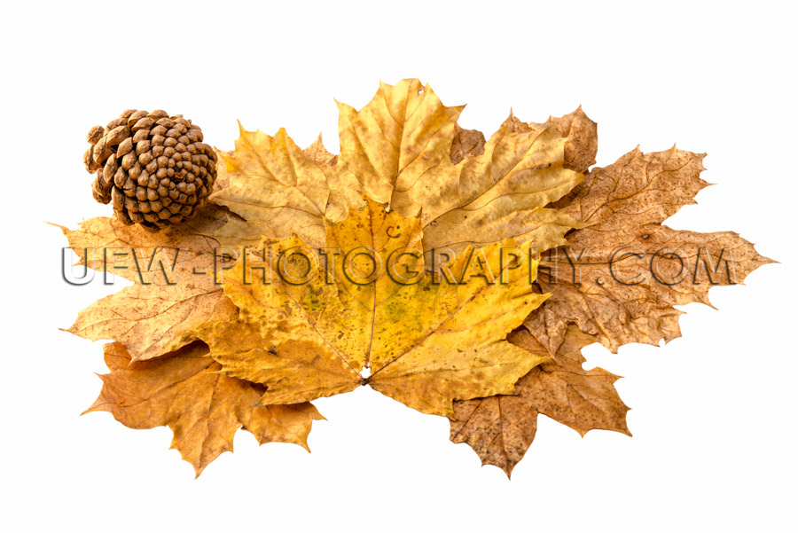Autumn leaves fir cone decorative leaf arrangement isolated Stoc