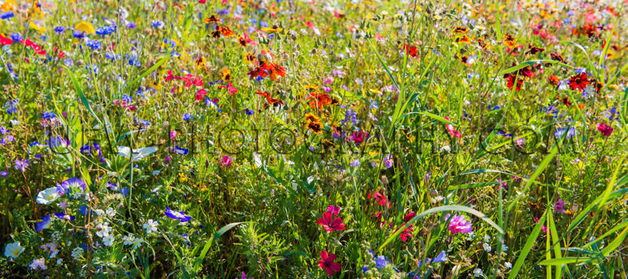 Beautiful abundant flower meadow springtime colorful garden Stoc