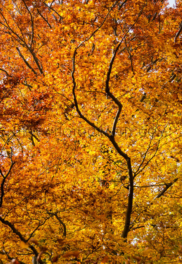 Brown golden autumn leaf canopy forest treetop colorful foliage