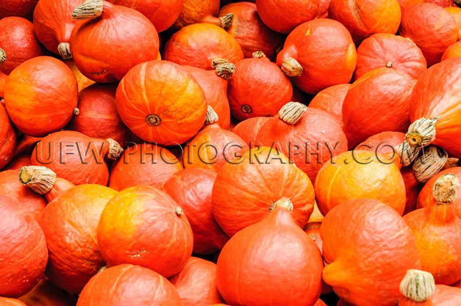 Herbst Früchte Viele Rot-Orangene Kürbisse Stock Foto