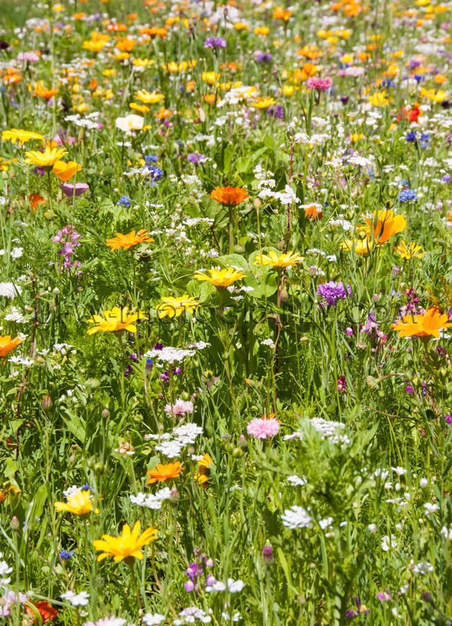Malerische Blumenwiese Schön Feld Verschiedene Blumen Stock Fot