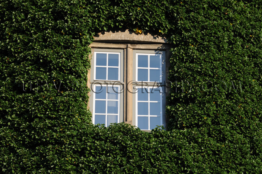 Fenster Umgeben Grüner Efeu Zugewachsen Romantisch Märchenhaft