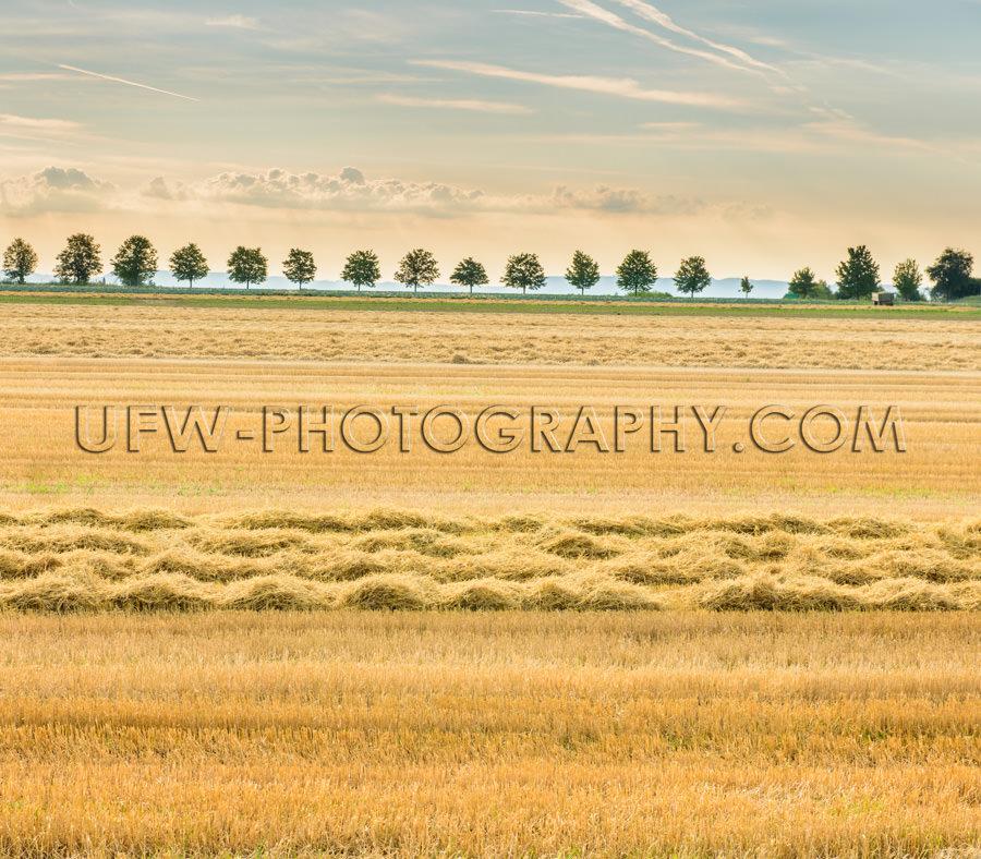 Malerisch Geerntet Feld Heu Stoppel Bäume Golden Licht Stock Fo
