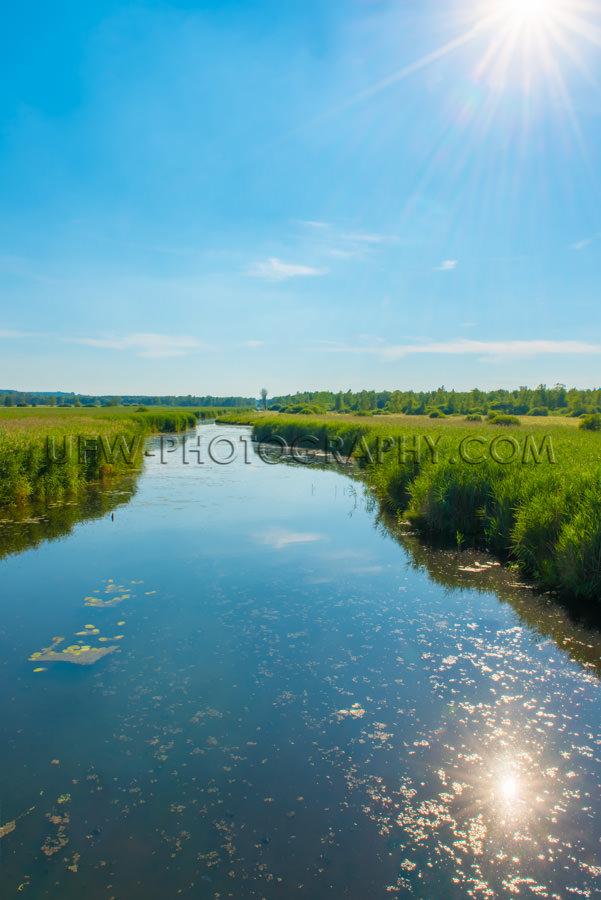 Moor Sumpf Wildnis Fluss Schilfgras Habitat Grün Himmel Friedli