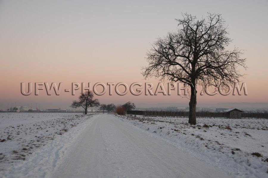 Schöne Winterszene Schneebedeckt Feldweg Baum Orangefarben Sonn
