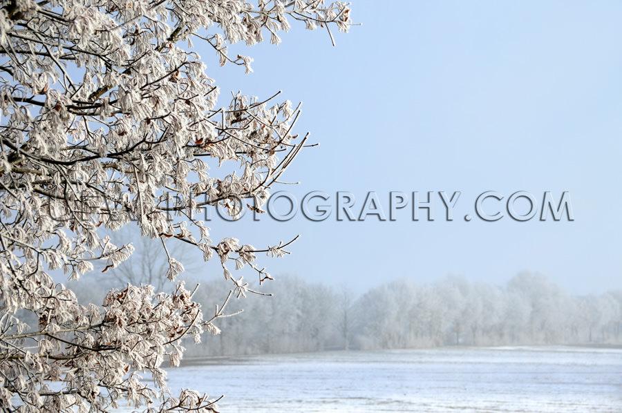 Winterszene Eisbedeckt Baum Schneebedecktes Feld Und Blauer Himm