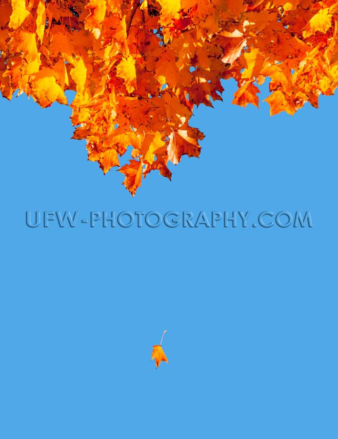 Bunte Herbst Blätter Herabfallen Fliegen Blauer Himmel Stock Fo
