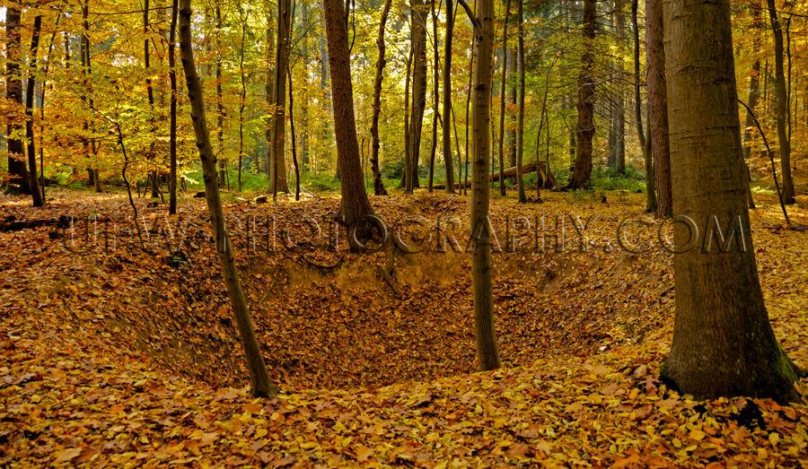 Krater friedlicher Herbstwald Buntes Laub Blätter Baum Stock Fo