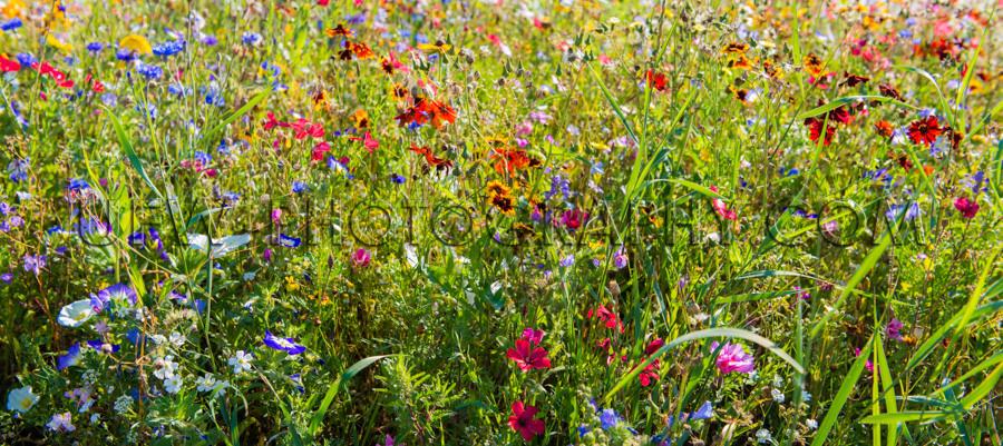 Schön Fülle Blume Wiese Frühling Bunt Garten Stock Foto
