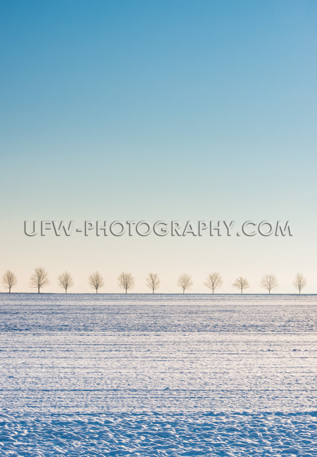 Winter Szene Schneebedecktes Feld Baumreihe Blauer Himmel Stock