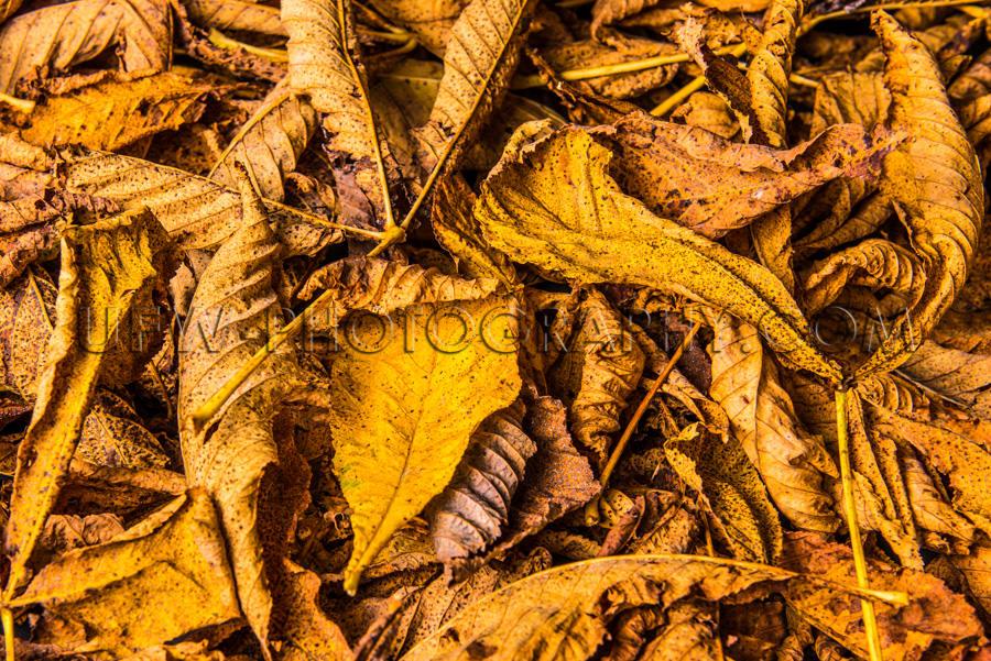 Schön Herbstlaub Hintergrund Gold Braun Gelb Stock Foto