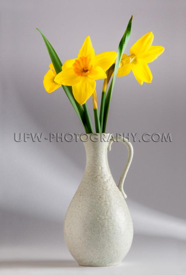 Schöne Gelbe Narzissen Leuchtend Klassische Vase Glas Lichteffe