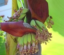 06.GardenofEden.bananas.jpg