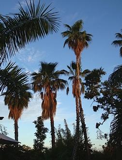 02.LaPaloma.palms.jpg