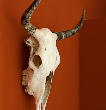 09.MiCasa.skull.jpg