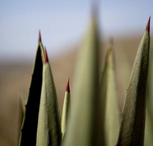 13.MiCasa.cactus.jpg