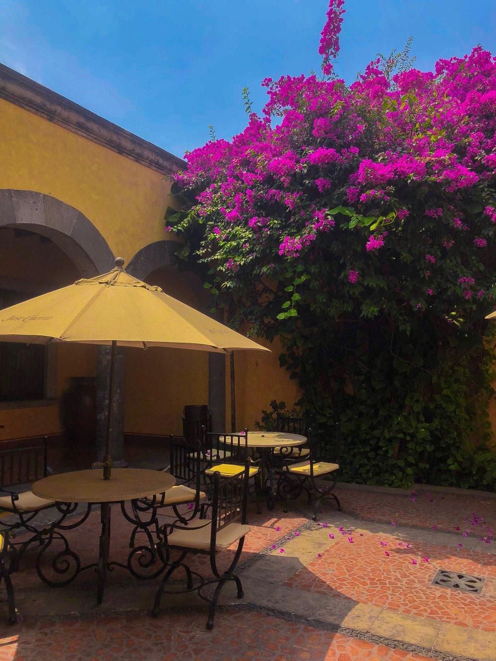 Inside the picturesque Jose Cuervo estate.