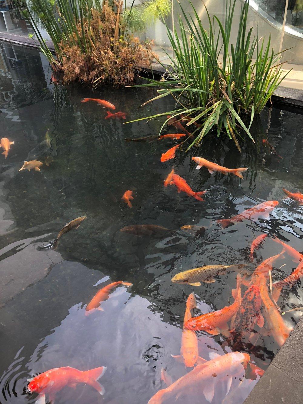 Koi pond inside the mall - very bougie!