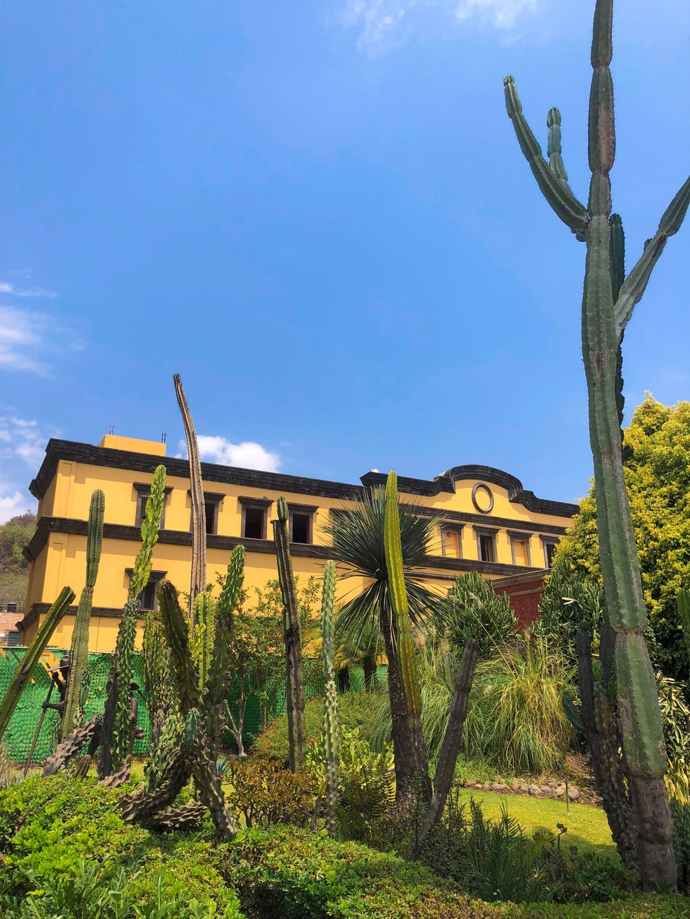 There were many cacti throughout Guadalajara. I am sure they thrive in the hot, dry weather.