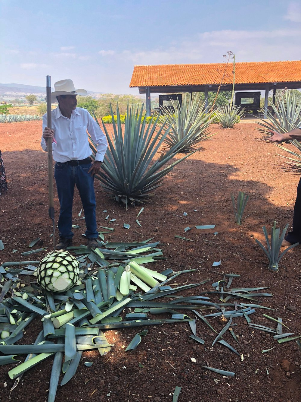 A  jimador  is a type of Mexican farmer who harvests agave plants, which are harvested primarily for the production of mezcal, sotol and tequila. Jimadores take pride in their profession, which is often passed down for many generations within families.