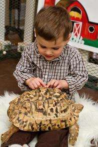 Tortoises--element620.jpg
