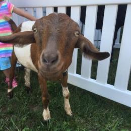 Goat smiling.jpg