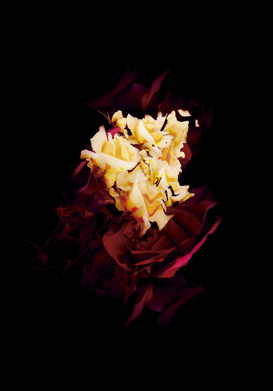 flowertrippin14by20.jpg