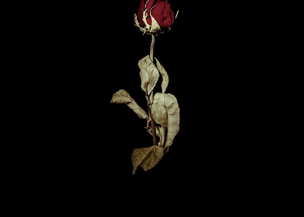rosesup5by7.jpg