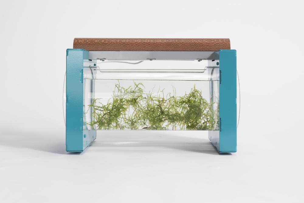 Horizontal Aquarium