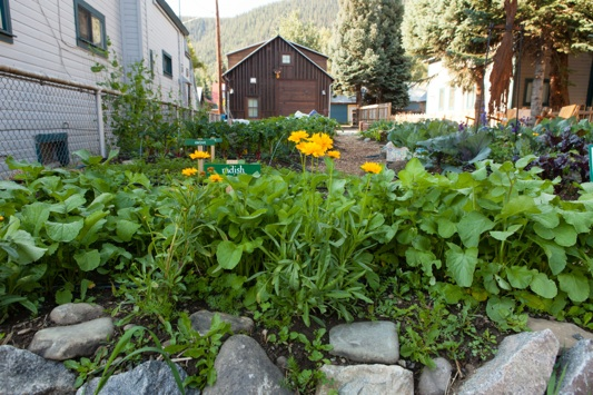 Mountain Roots Food Project's Elk Avenue Demonstration Garden