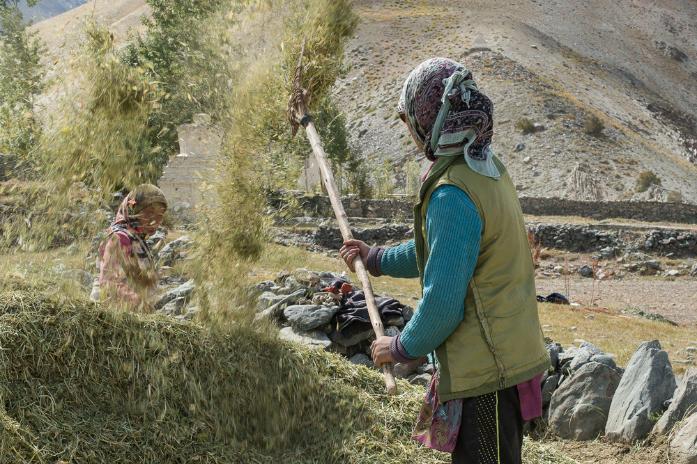 Women winnow barley at a farm in the village of Kumik, in Zanskar, Kashmir. Few families in the village continue to use this fully manual and labor-intensive technique to extract grain from the chaff. A dwindling manpower in the village is forcing villagers to abandon traditional farming methods. Warmer temperatures are causing pest infestation, resulting in pesticide use.