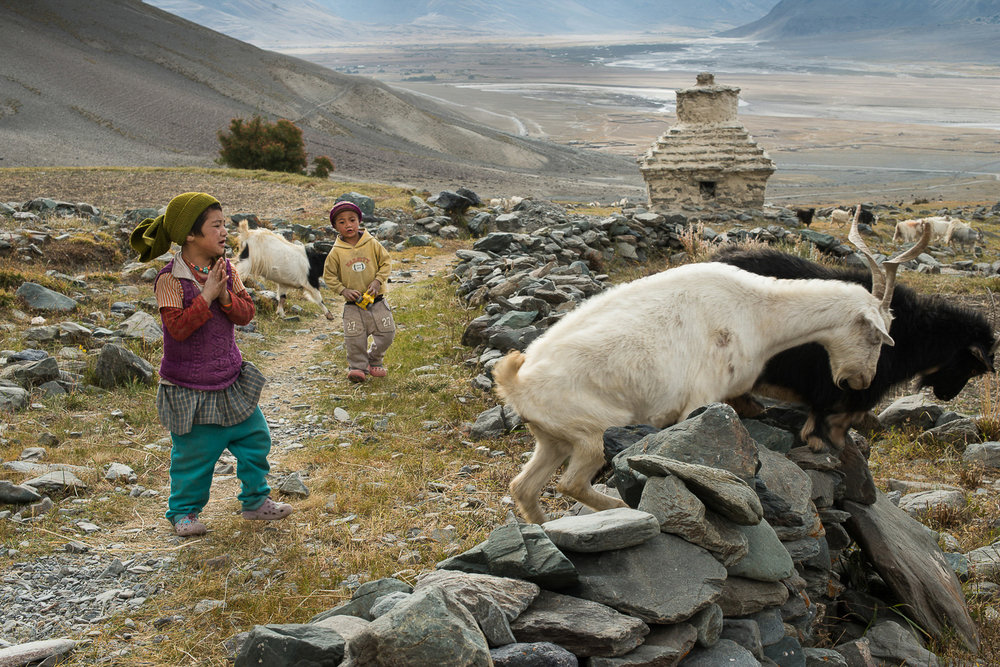 Tashi Tenzin (foreground) and Tenzin Dala (background) chase sheep that are being herded in the village of Kumik in Zanskar, Kashmir. Each day, one family from the village takes on the responsibility of herding all the sheep from the village to the pastures nearby for grazing. Although families have their own homes and fields, various farming tasks and animal husbandry are accomplished through complex labor and resource-sharing methods. Due to a short growing season, these methods have been developed over centuries to counter resource and time scarcity.